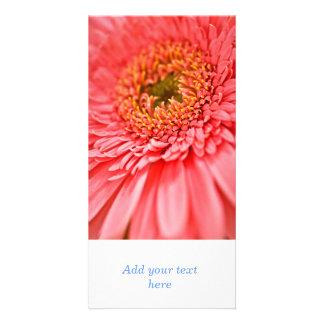 Gerbera flower photo cards