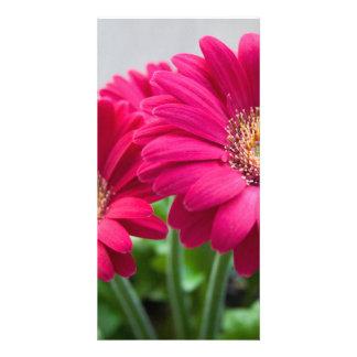 Gerbera Customized Photo Card