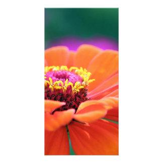gerbera photo cards