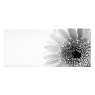 Gerbera Rack Card