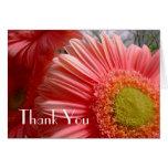 Gerbera Thank You Card