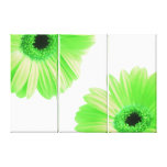 Gerbera Twins Green Gallery Wrapped Canvas