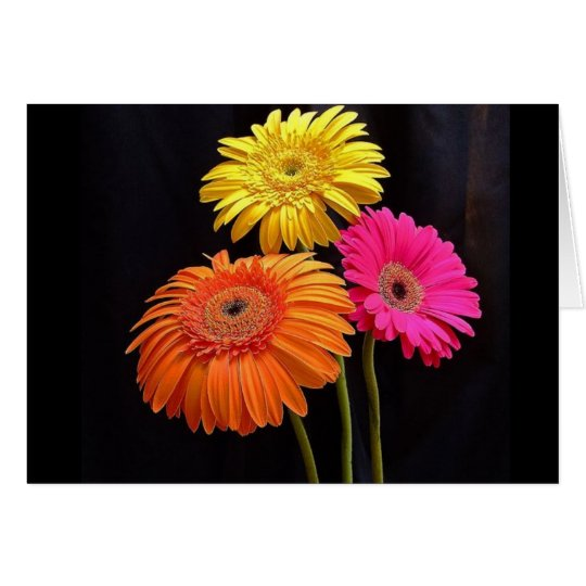 GERBERAS GALORE 2 CARD
