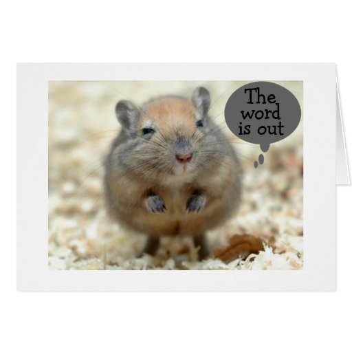 """GERBIL SAYS """"THE WORD IS OUT"""" GROUP BIRTHDAY GREETING CARDS"""