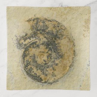 German Ammonite with Dendrites Trinket Trays