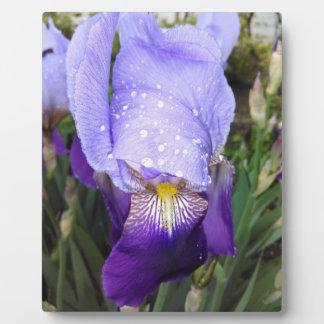 German Iris With Some Raindrops Plaque
