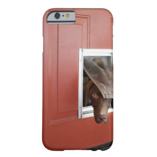 German pointer looking outside, through doggie barely there iPhone 6 case