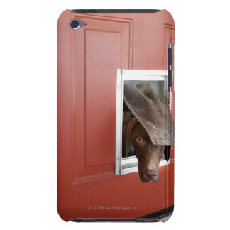 German pointer looking outside, through doggie iPod Case-Mate case