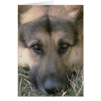 German Shepard Note Card