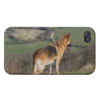 German Shephard Looking Down Hill iPhone 4/4S Cases