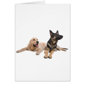 german shepherd and golden retriever card