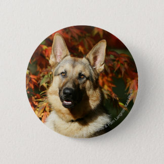 German Shepherd Autumn Leaves 6 Cm Round Badge