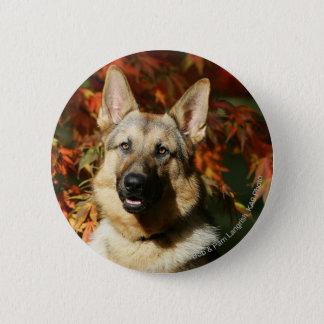 German Shepherd Autumn Leaves 6 Cm Round Badge