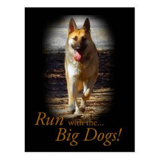 German Shepherd Big Dogs Postcard