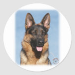 German Shepherd Dog 9Y554D-150 Stickers