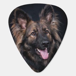 German Shepherd Dog Alsatian cute loyal Plectrum
