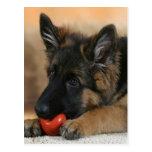 German Shepherd Dog Design Post Card