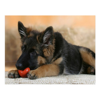 German Shepherd Dog Design Postcard