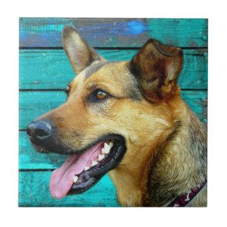 German Shepherd Dog Face Tile