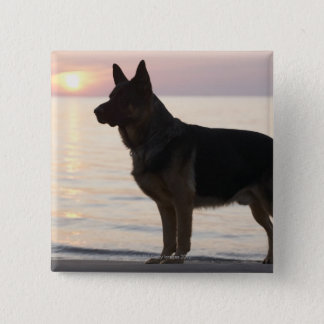 German Shepherd dog on Georgian Bay, Ontario, 15 Cm Square Badge