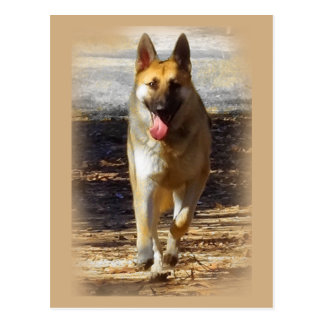 German Shepherd Dog post card