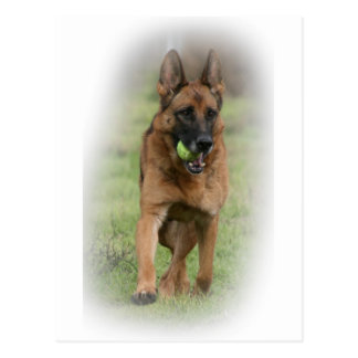"German Shepherd Female ""Vita"" Postcard"