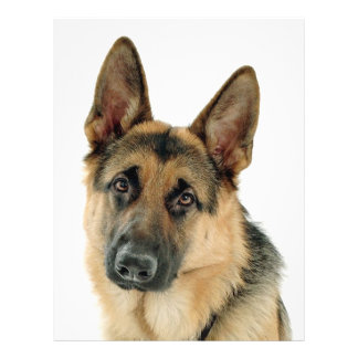 German Shepherd Personalized Flyer
