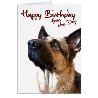 German Shepherd fromthedog1 Card