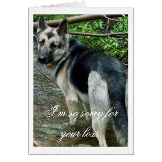 German Shepherd in the Creek Sympathy Cards