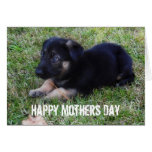 German Shepherd: Mothers Day Card