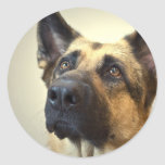 German Shepherd Picture Stickers