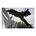 German Shepherd Police Dog Poster