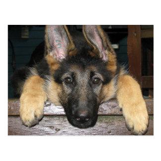 German Shepherd Pup Postcard
