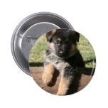 "German Shepherd Puppy ""Big Max"" Pins"