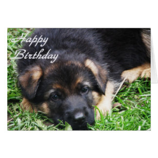 German Shepherd Puppy - Birthday card