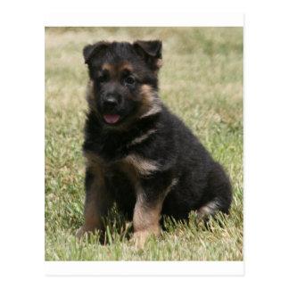 """German Shepherd Puppy """"Caitie"""" Postcard"""