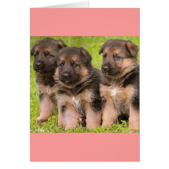 German Shepherd Puppy Dog Blank Greeting Card