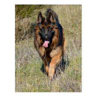 German Shepherd Puppy Dog Blank Post Card