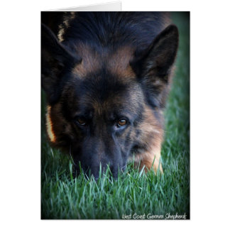 German Shepherd Randy vom Leithawald Card