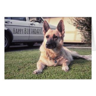 German Shepherd, Watchful Birthday Pet Lover Dog Greeting Card