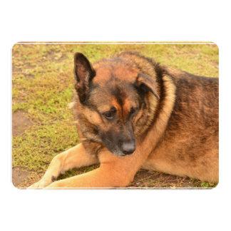 German Shepherd with One Floppy Ear 13 Cm X 18 Cm Invitation Card