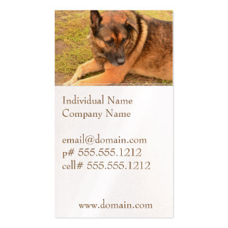 German Shepherd with One Floppy Ear Pack Of Standard Business Cards