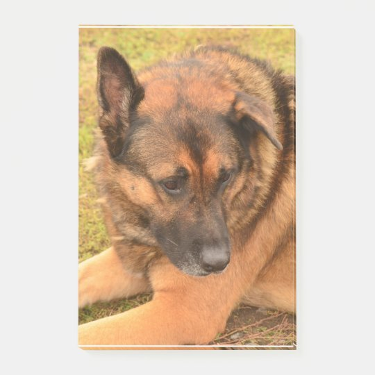 German Shepherd with One Floppy Ear Post-it® Notes