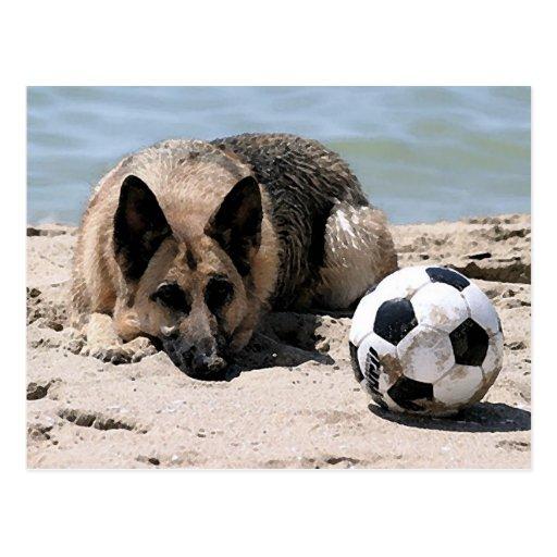 German Shepherd With Soccer Ball Post Card