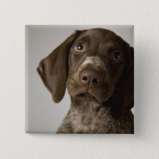 German Short-Haired Pointer puppy 15 Cm Square Badge