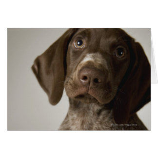 German Short-Haired Pointer puppy Card