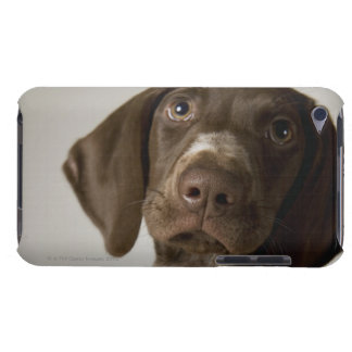 German Short-Haired Pointer puppy Barely There iPod Covers