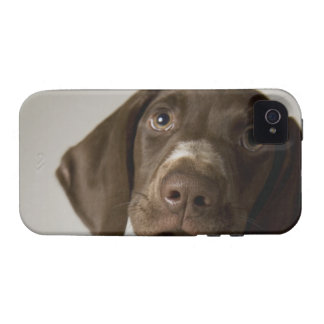 German Short-Haired Pointer puppy iPhone 4 Covers