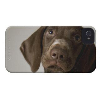 German Short-Haired Pointer puppy iPhone 4 Case