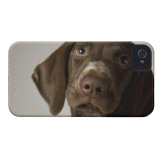 German Short-Haired Pointer puppy iPhone 4 Case-Mate Cases